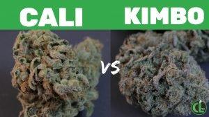 Cali Kush vs Kimbo Kush