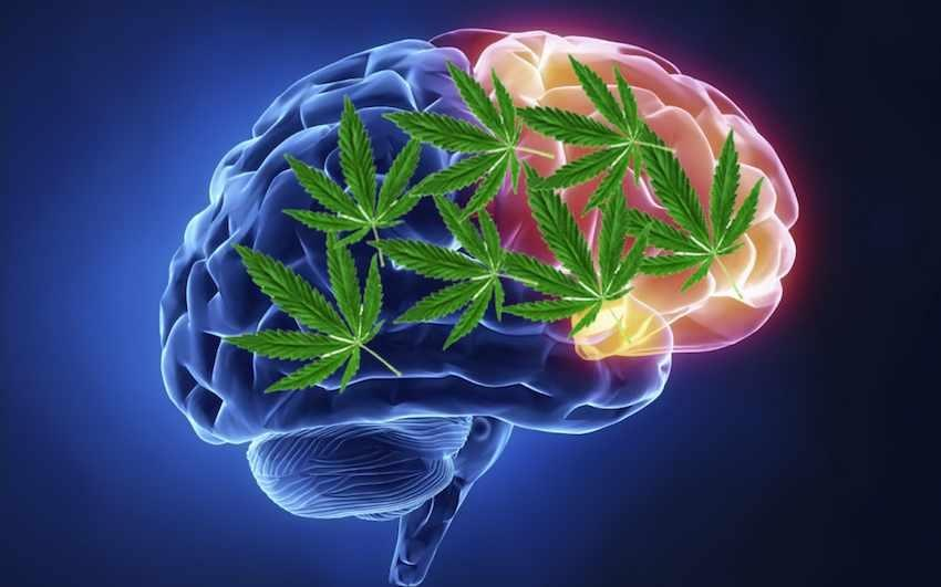 Brain on Herb
