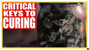 Critical Keys to Curing